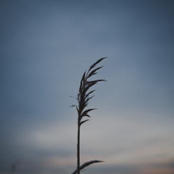 Ein vinterdag…